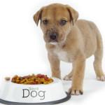 Podstawowe zasady dobrego żywienia psa