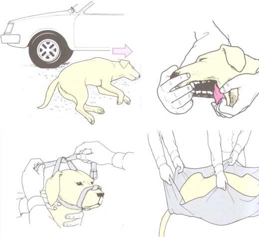 potracenie psa samochod