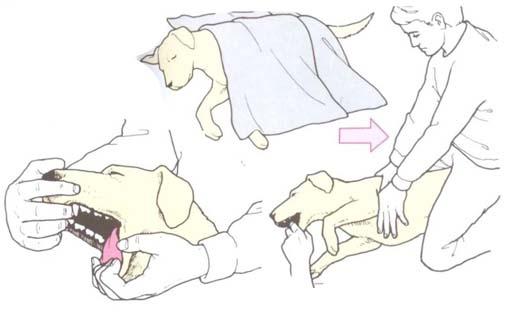 zapasc psa