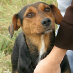 Zachowanie psa w nowym domu po adopcji
