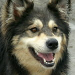 Zasady Adopcji Psa