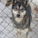 Żywienie psa przez pierwsze dni po adopcji
