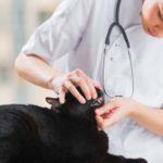 Badanie jamy ustnej kota