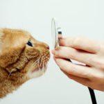 Mierzenie temperatury ciała kota