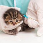 Szczepionki wieloskładnikowe