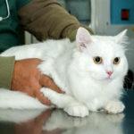 Zapobieganie chorobom kotów
