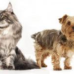 Przyzwyczajanie psów i kotów do siebie